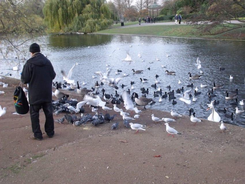 patos-hombre-estanque