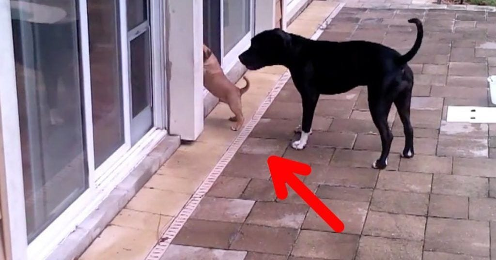 perro despistado