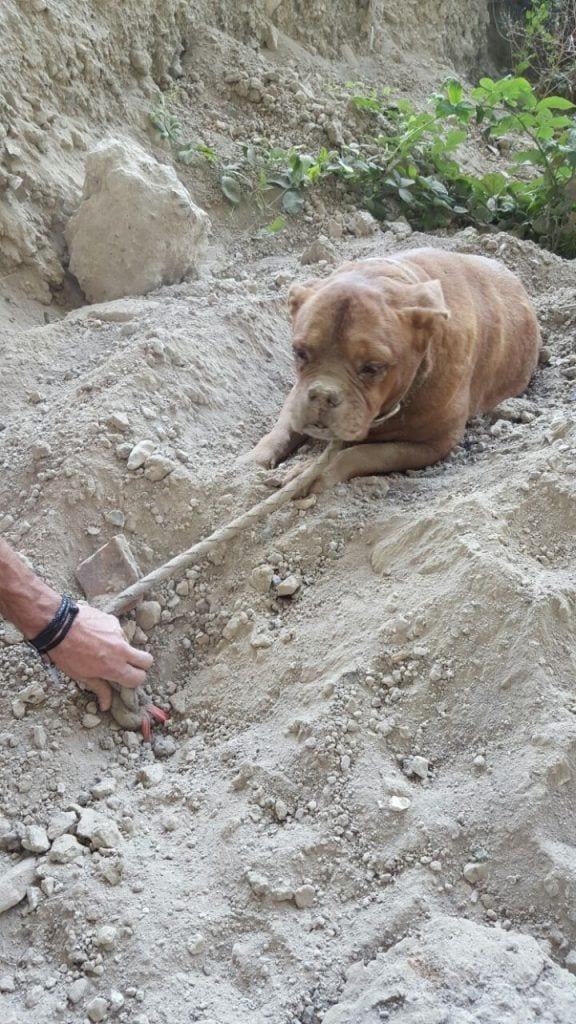 perro-enterrado-vivo-1