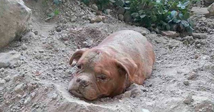 perro enterrado vivo
