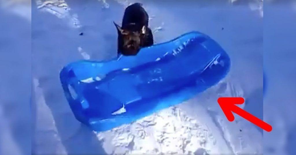 perro nieve