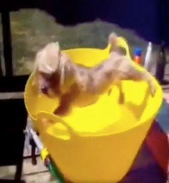 perros agua
