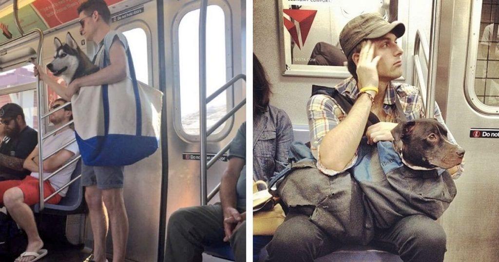 Así viajan los perros grandes en el metro de Nueva York