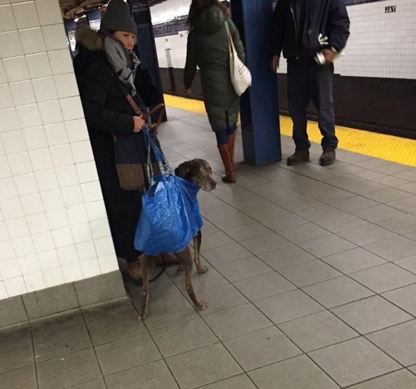 perros-metro04