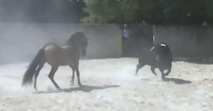 toro caballo entrenamiento