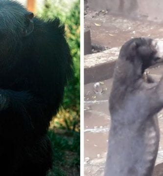 zoo horribles