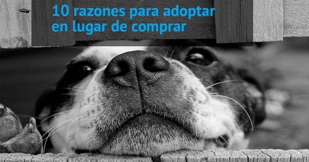 10 razones de peso para adoptar en lugar de comprar un perro