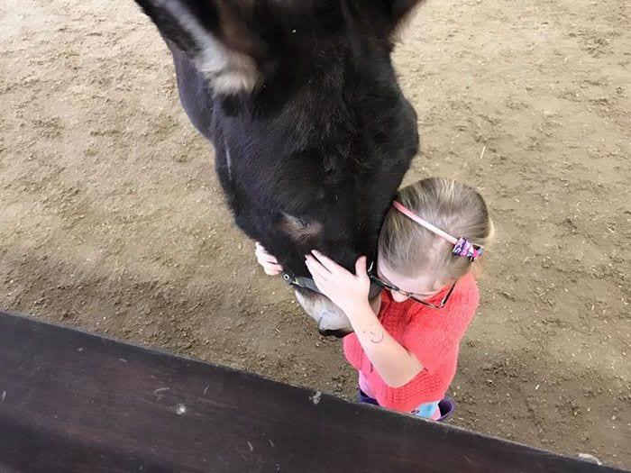burro-amistad4