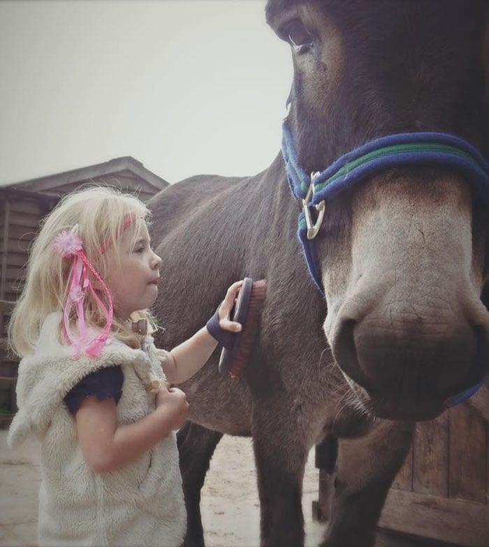 burro-amistad5