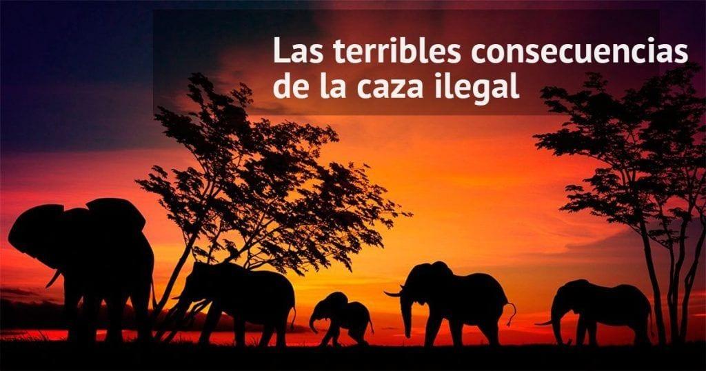 Las terribles consecuencias de la caza ilegal en animales salvajes