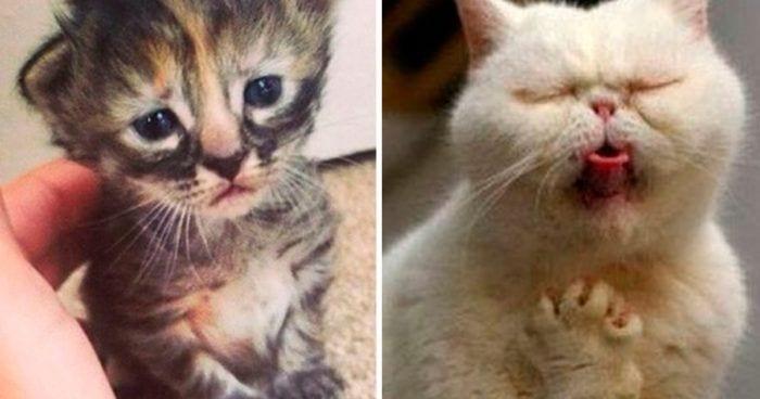 drama gatos