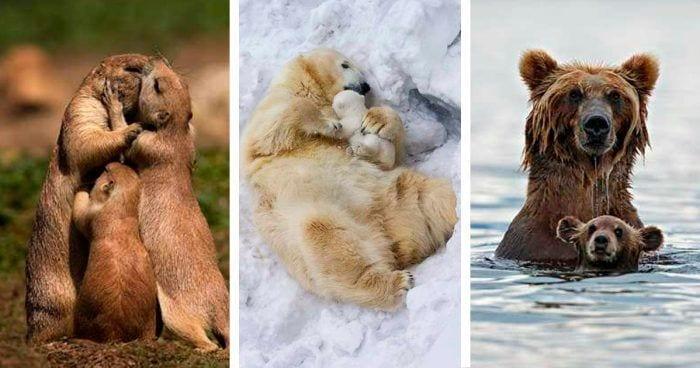 familia animales destacada