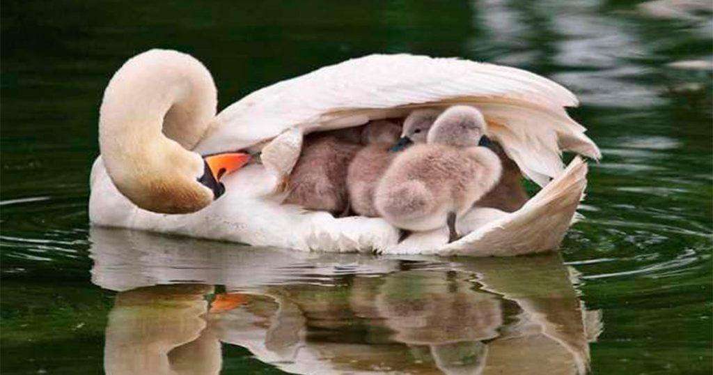 Mira estas adorables crías junto a sus papás