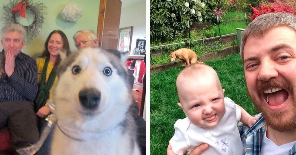 fotos divertidas perros