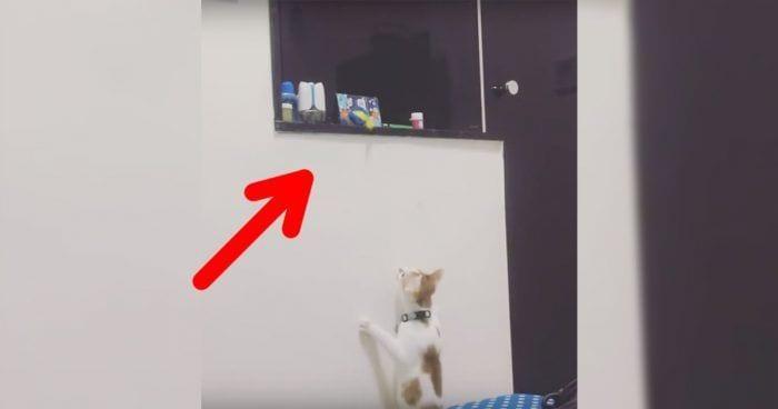 gato juguete ayuda