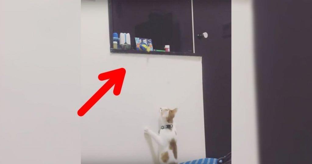 Un gato ayuda a conseguir un juguete