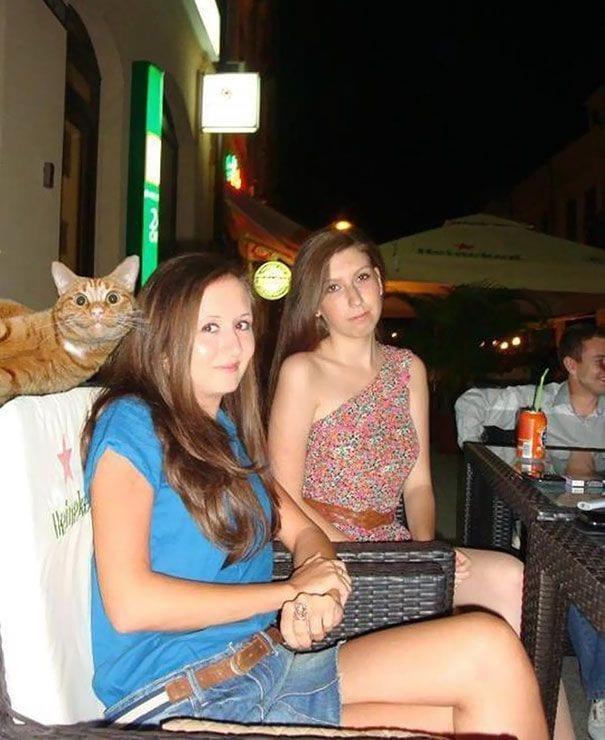 gatos-alegrando-fotos3