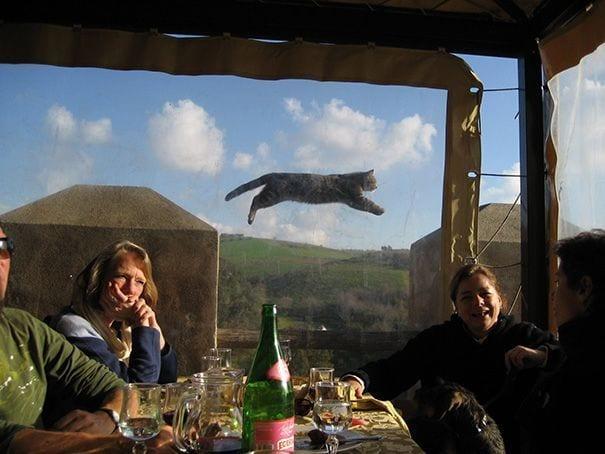 gatos-alegrando-fotos4