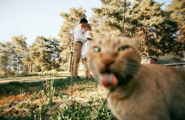 gatos-alegrando-fotos5