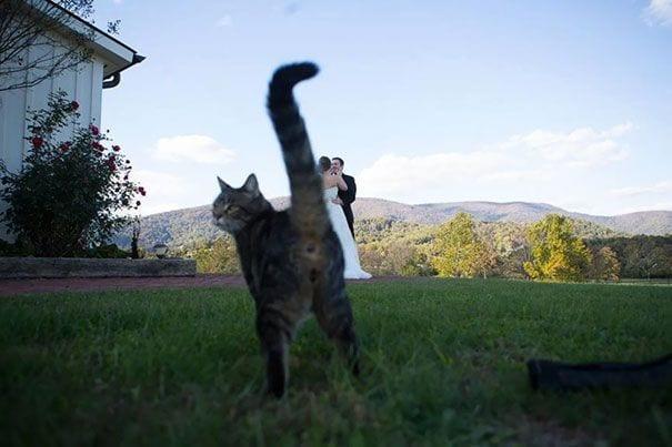 gatos-alegrando-fotos8