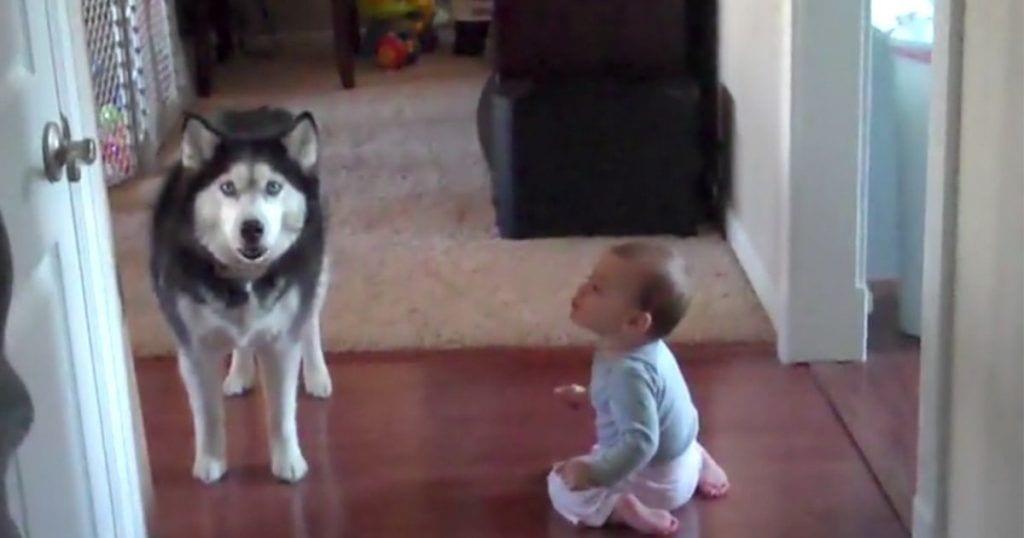 husky y bebe conversacion