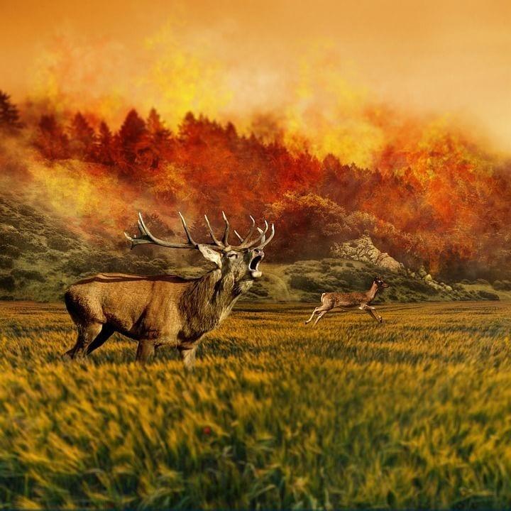 incendio-bosque