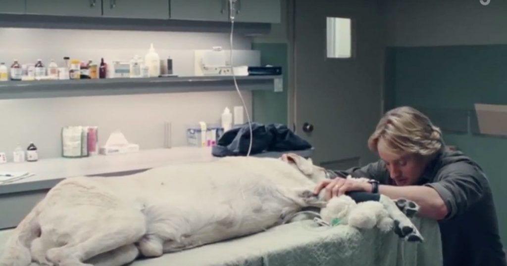 muerte-perros