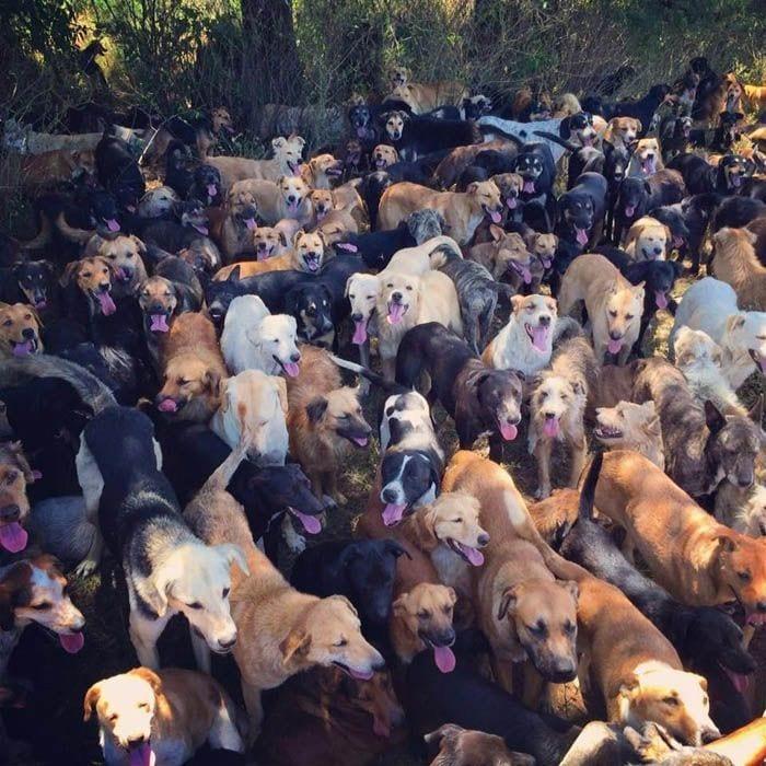mujer-rescata-mil-perros1