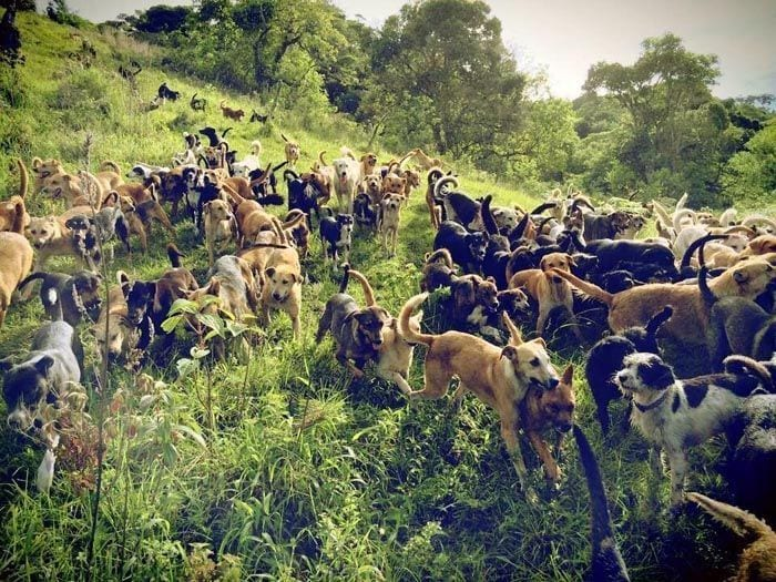 mujer-rescata-mil-perros2