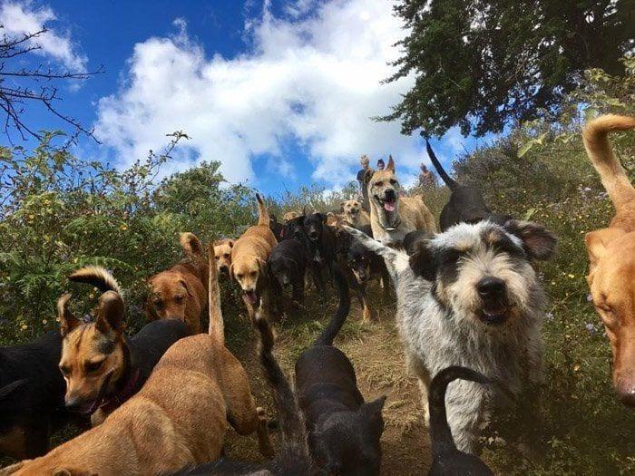mujer-rescata-mil-perros7