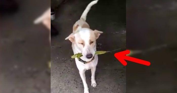 perro agradecido rescate