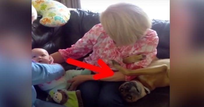 perro celoso bebe destacada