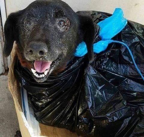 perro-encontrado-basura