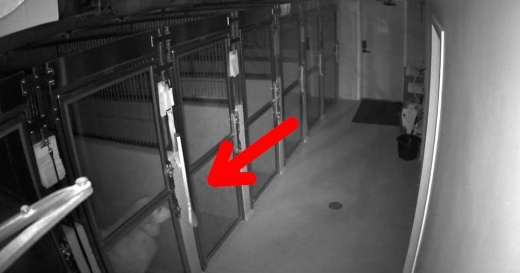 Un perro se escapa de una residencia