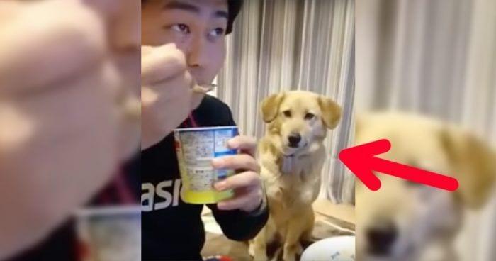 perro helado