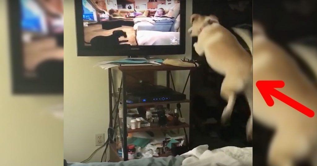 Este perro quiere ser amigo de otro perro de la televisión