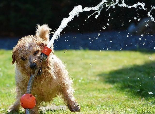 perros-adopcion01