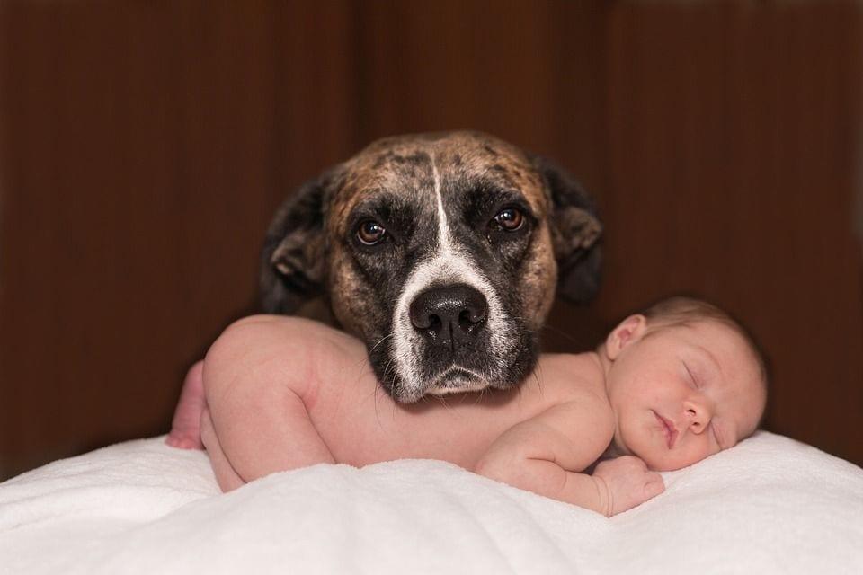 perros-adopcion04