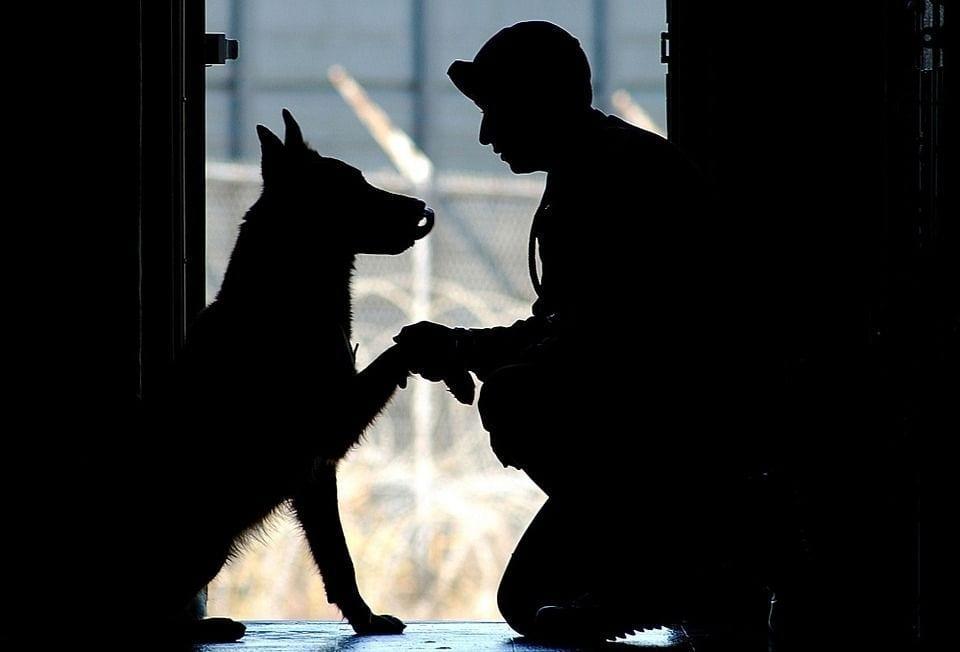 perros-adopcion05