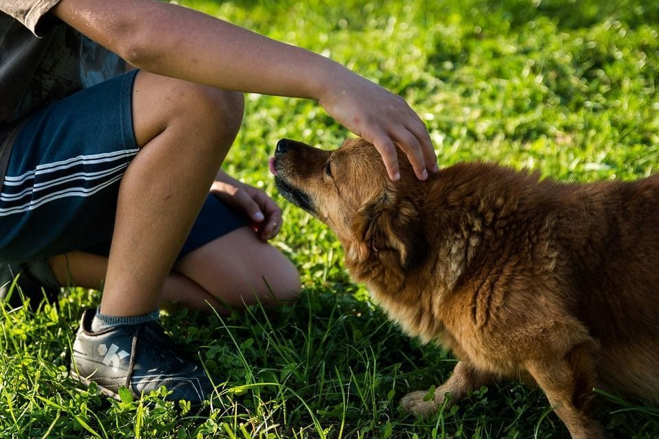 perros-adopcion06
