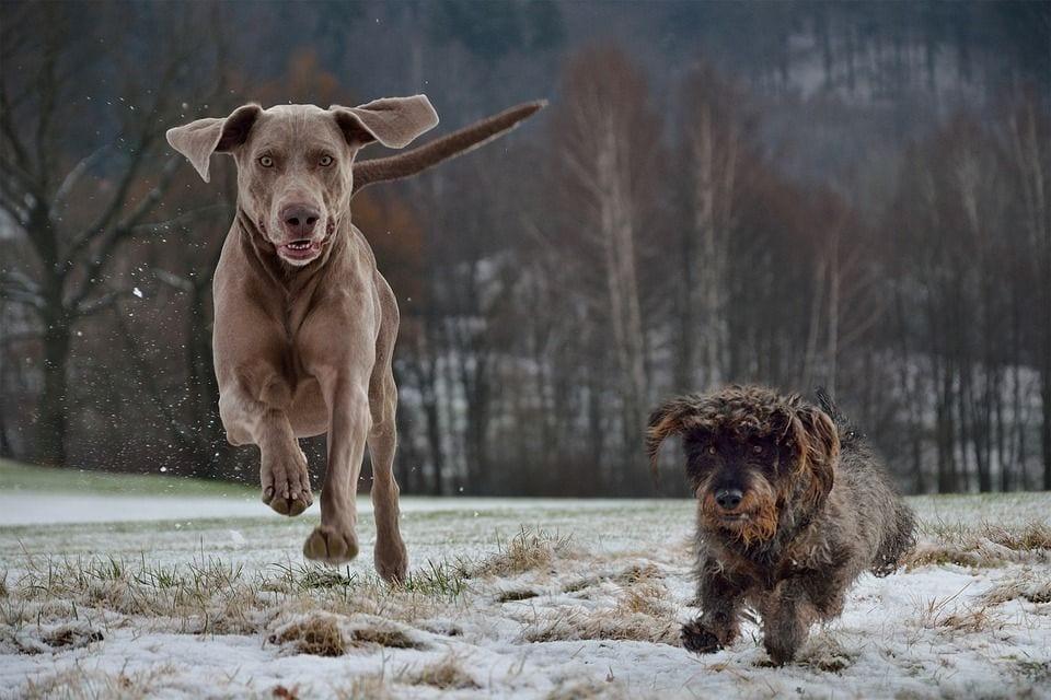 perros-adopcion07