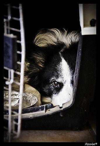 perros-viajar-avion4