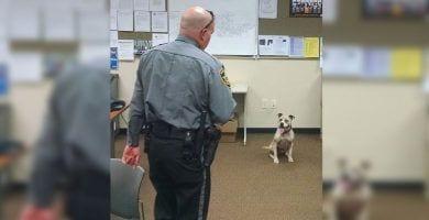 policia pitbull