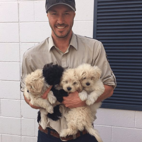 rescatador-perros7