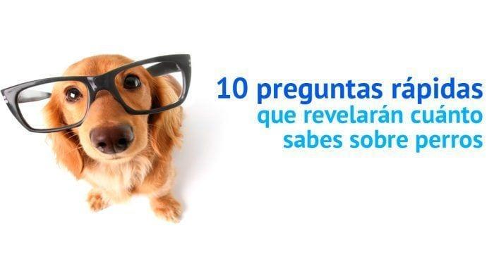test perros