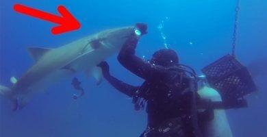 tiburon ayuda buceador