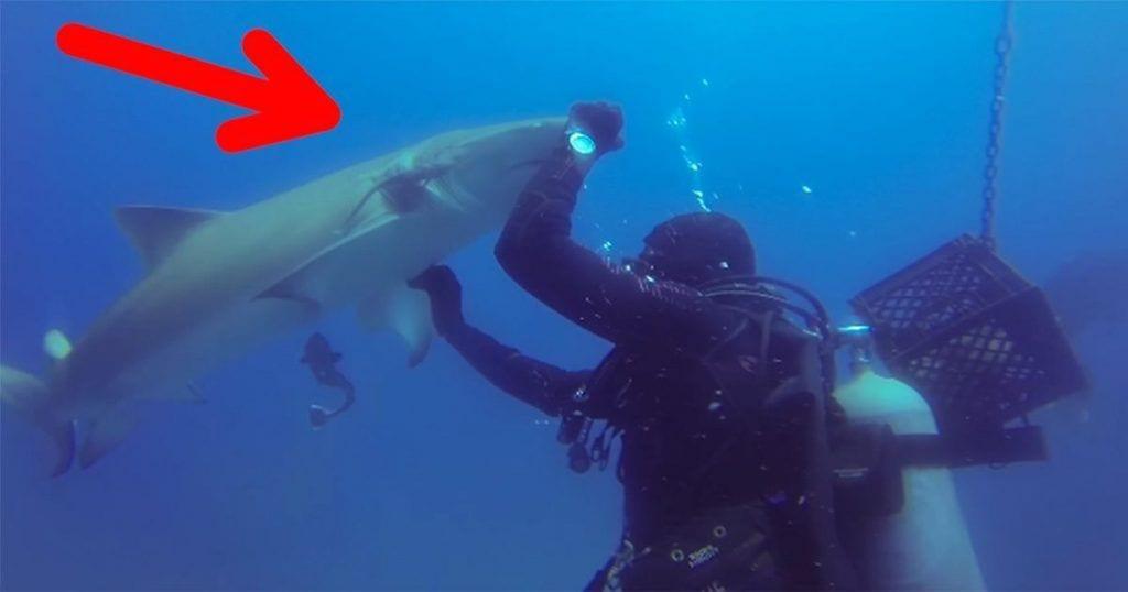 Nunca imaginaste que un tiburón actuara de esta manera