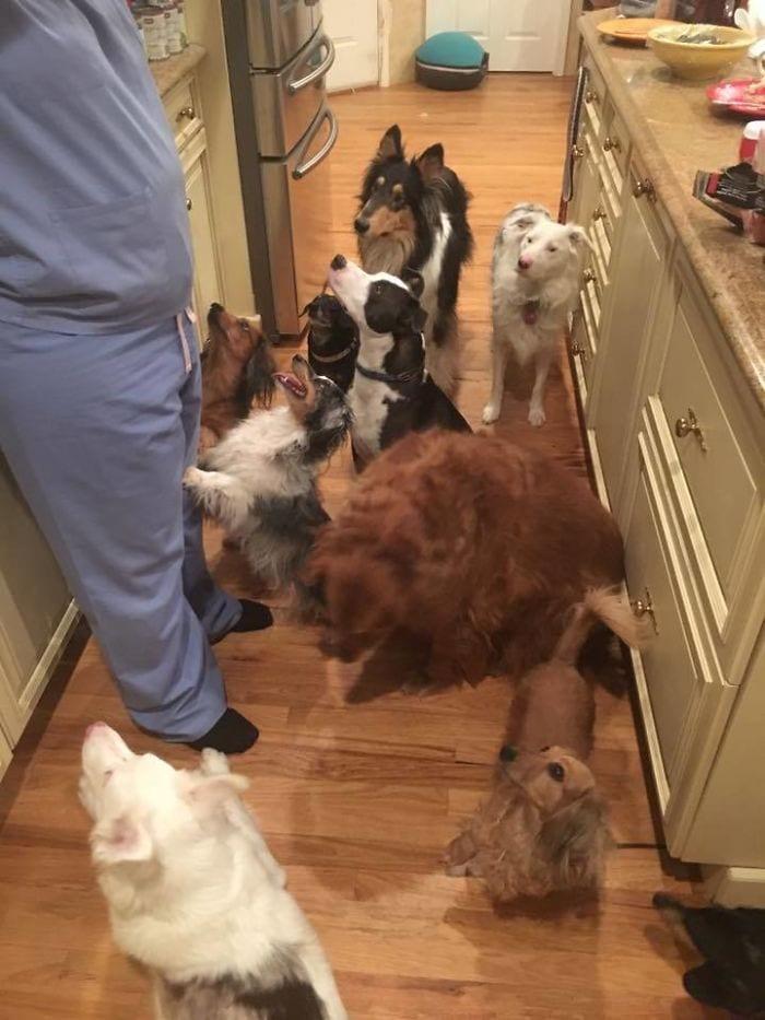 vivir-con-muchos-perros1