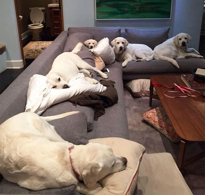 vivir-con-muchos-perros10