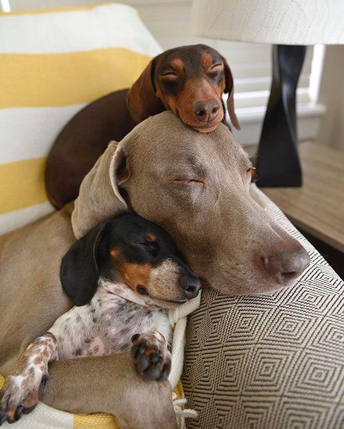 vivir-con-muchos-perros4